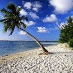 Utila_palmtrees_webshots